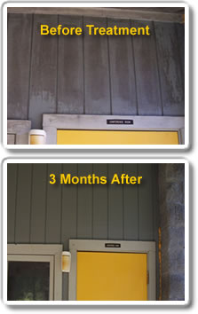 mold solutions mold treatment